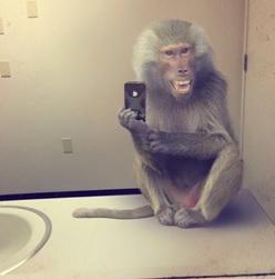 Babbuino_selfie